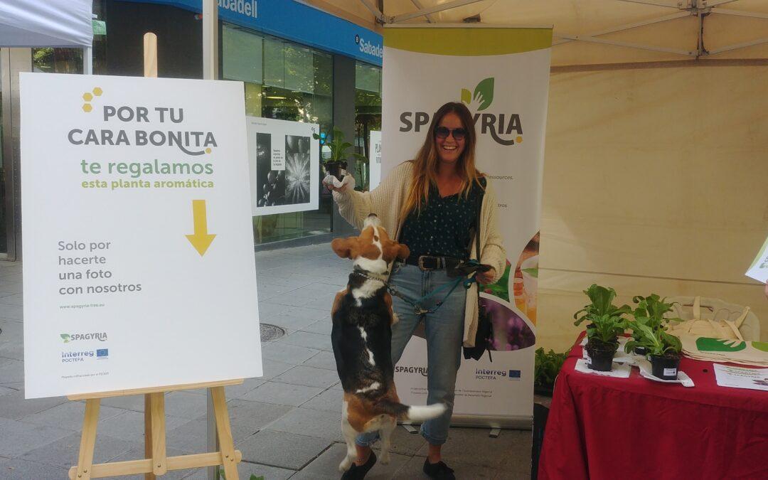 SPAGYRIA, sur le marché agroécologique de Huesc
