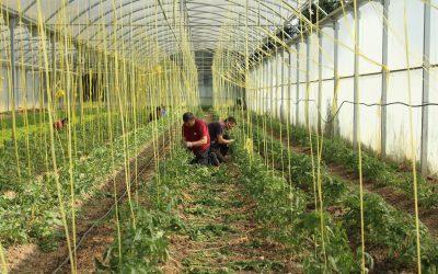 TRANSFORMACIÓN DE PLANTAS AROMÁTICAS Y MEDICINALES