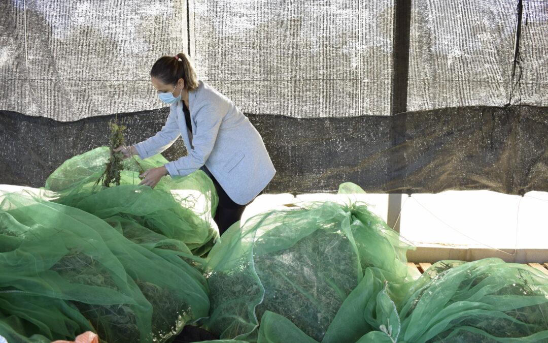 La labor del Centro de Investigación y Tecnología Agroalimentaria (CITA) de Aragón dentro del proyecto SPAGYRIA