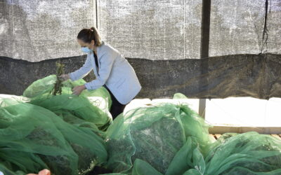 Le travail du Centre de recherche et de technologie agro-alimentaire (CITA) en Aragon dans le cadre du projet SPAGYRIA